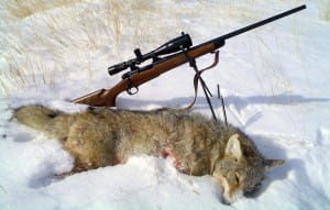 best-22-250-rifle-for-coyotes-hunting